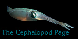 The Cephalopod Page Home